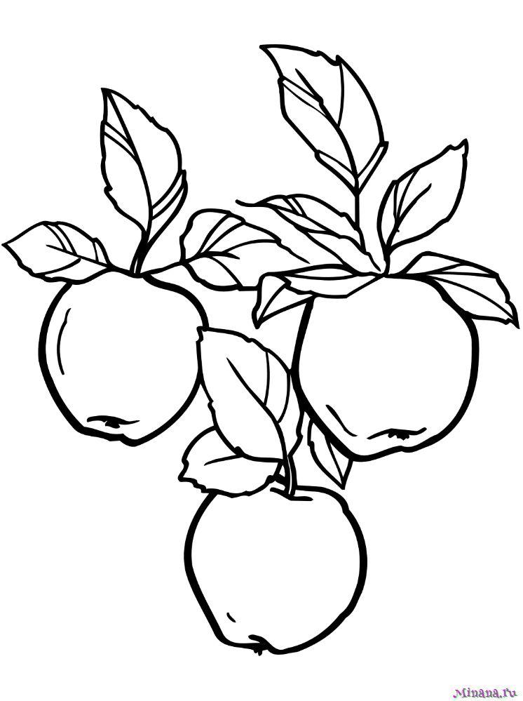 Раскраска яблоки на ветке