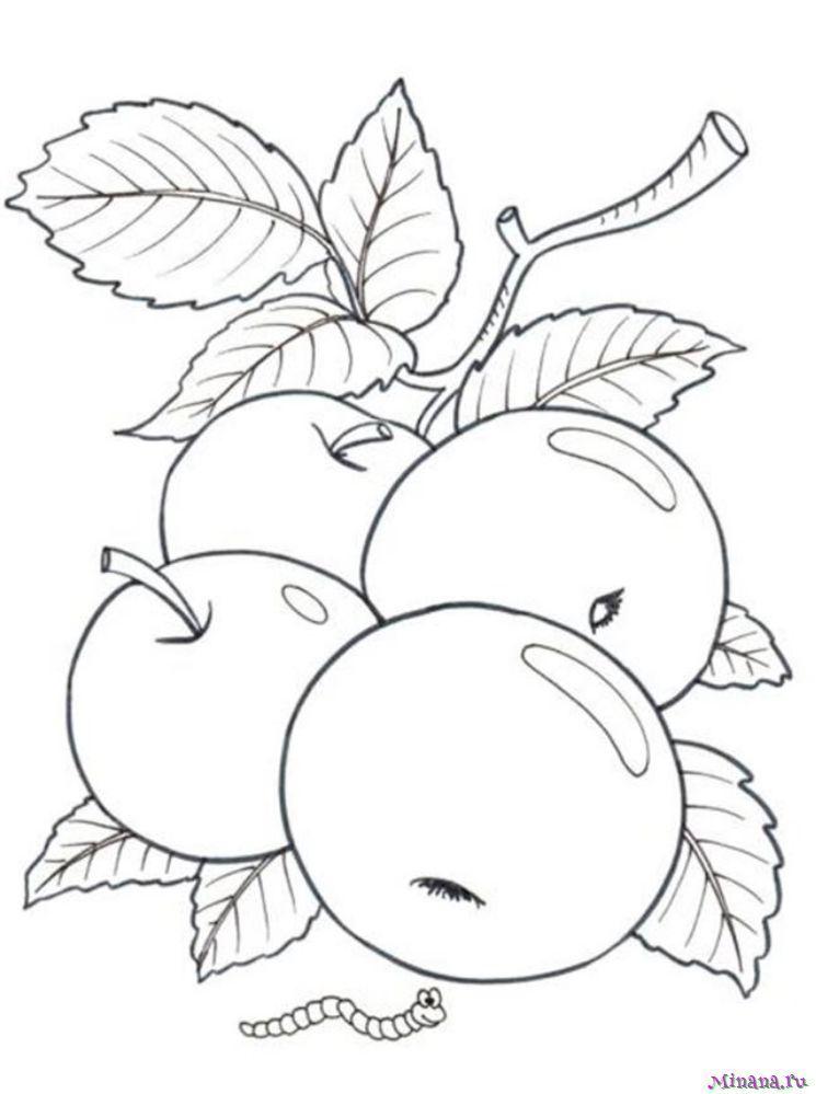 Раскраска яблоки