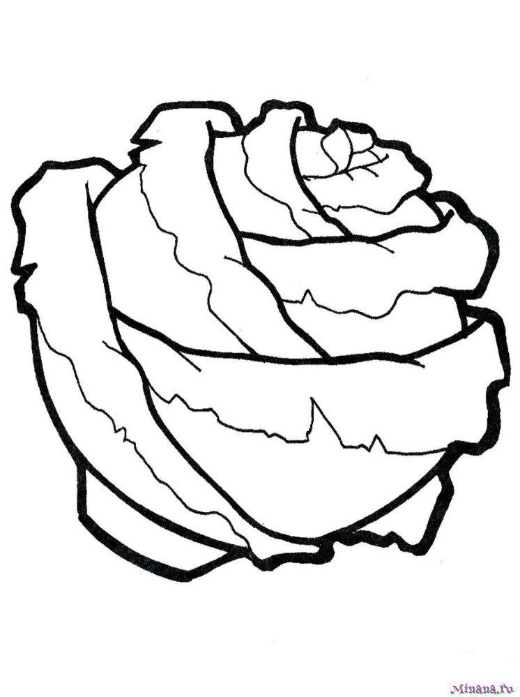 Раскраска капуста 8
