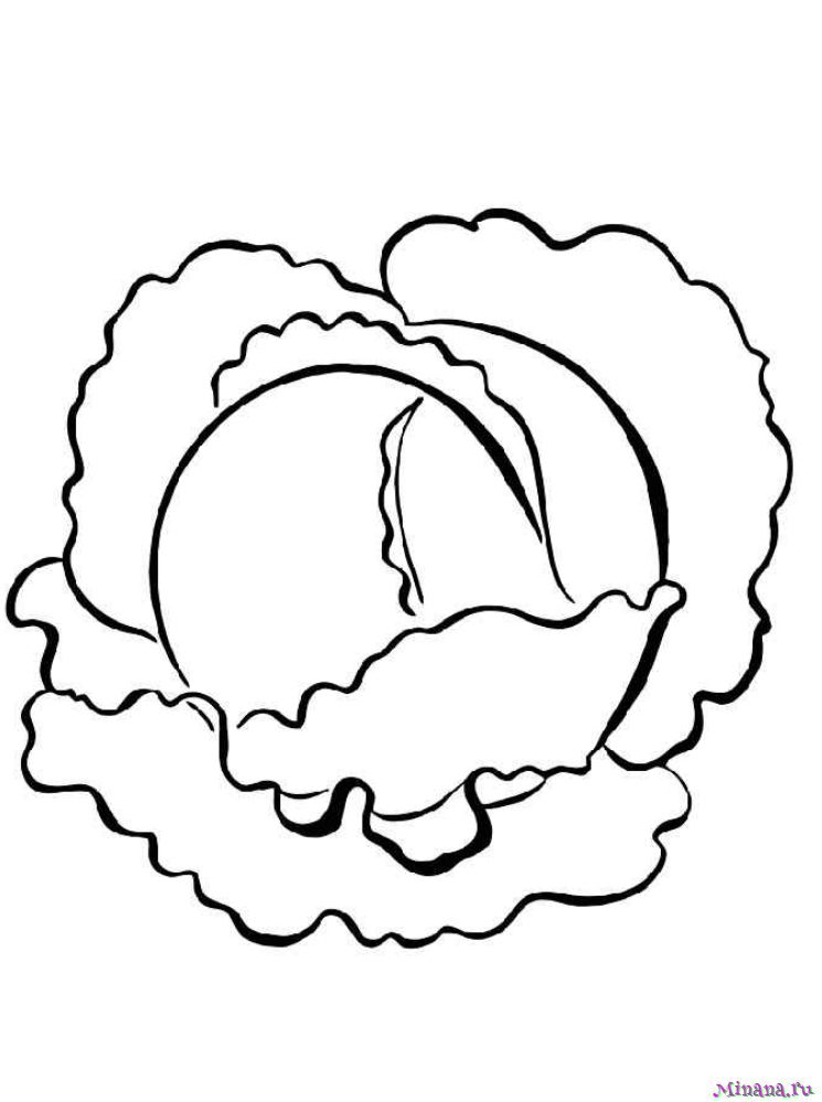 Раскраска капуста 9