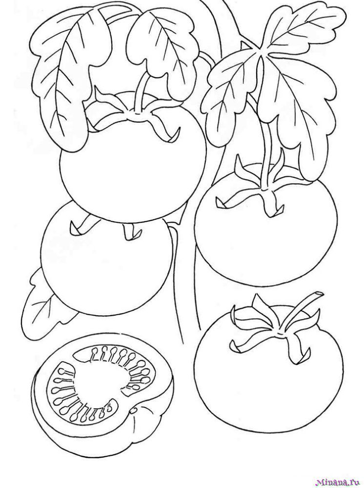 Раскраска помидоры 2