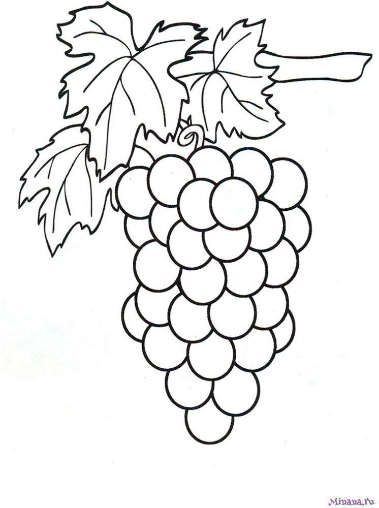 Раскраска виноград на ветке