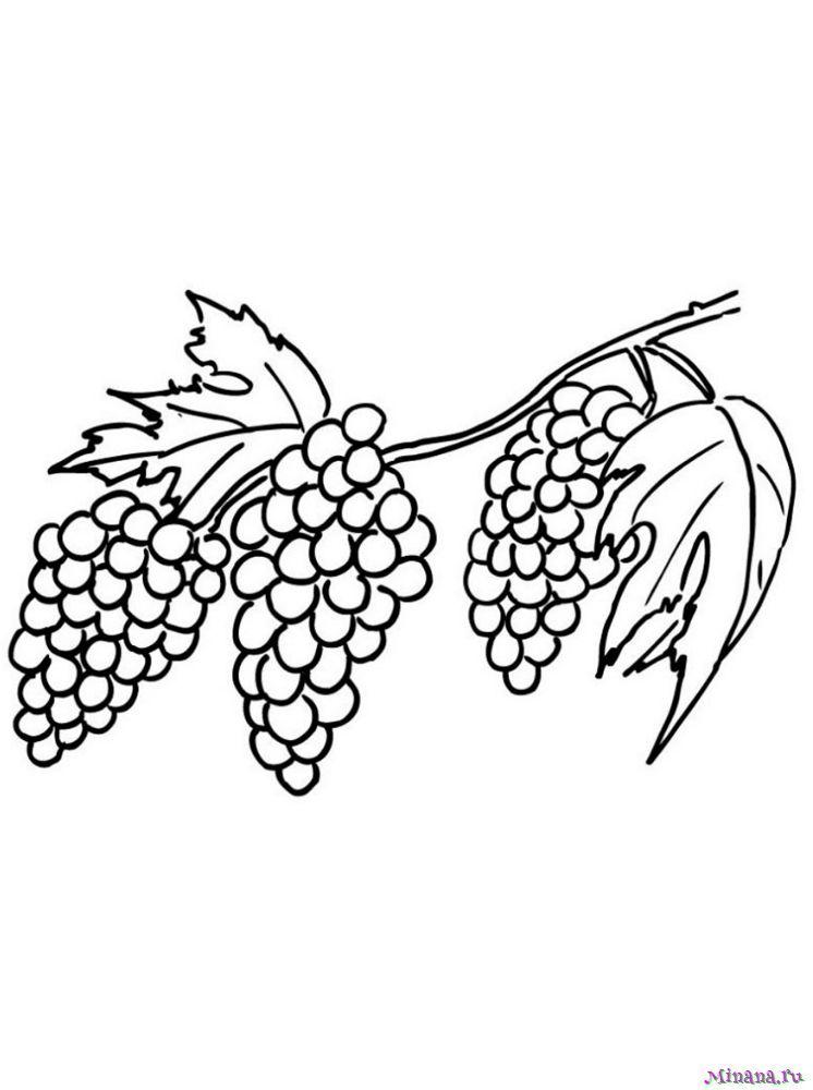 Раскраска виноград 5