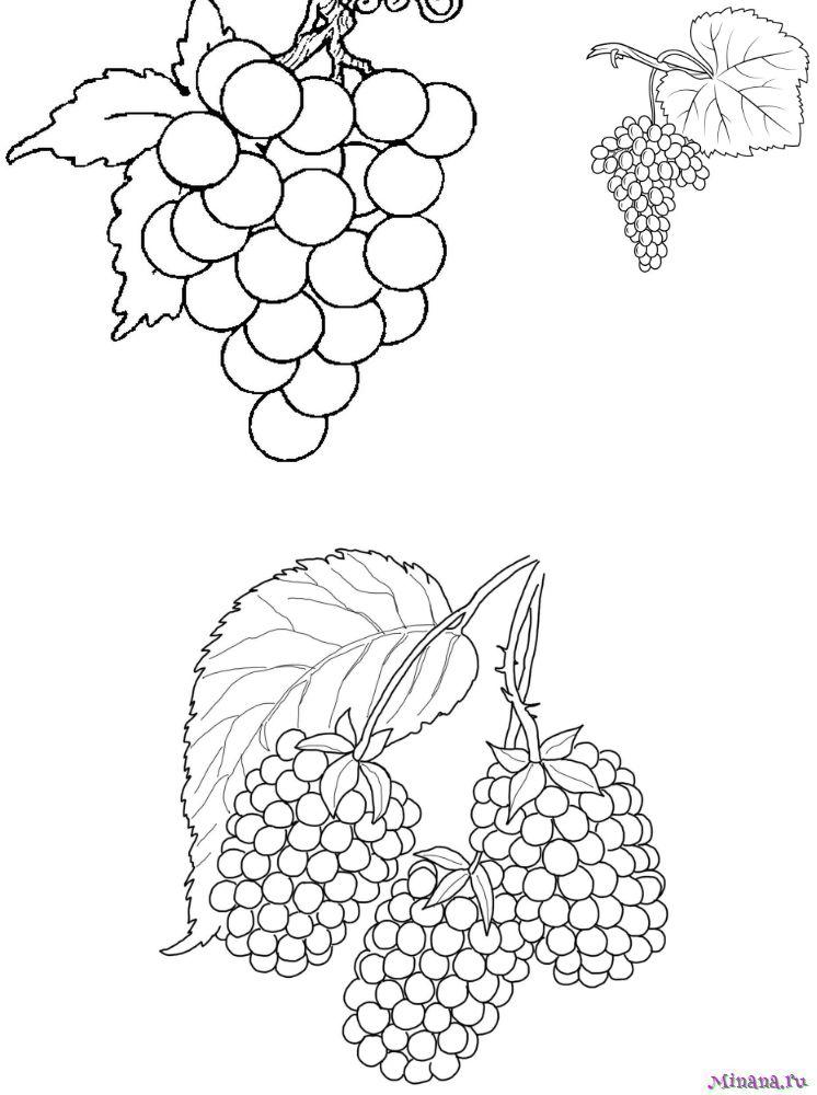 Раскраска виноград 8