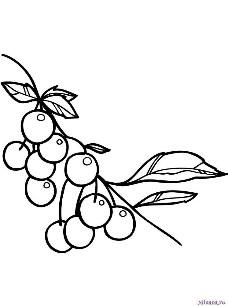 Раскраска вишня 8
