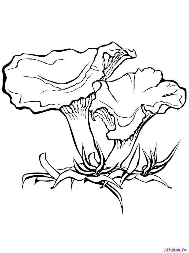 Раскраска грибы лисички