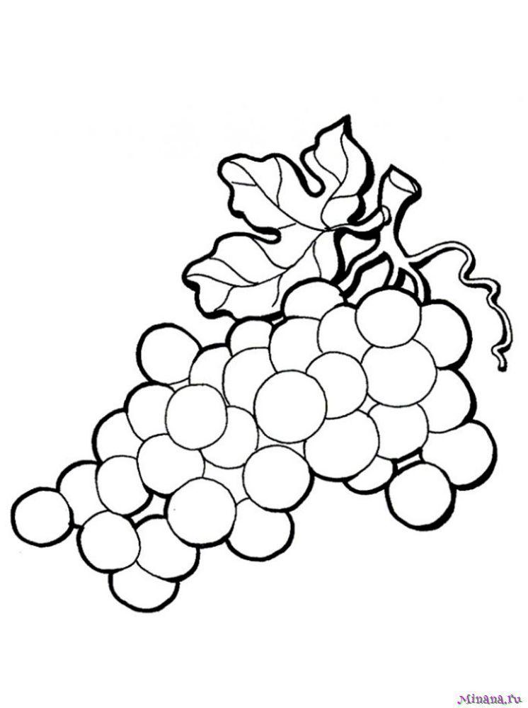 Раскраска гроздь винограда