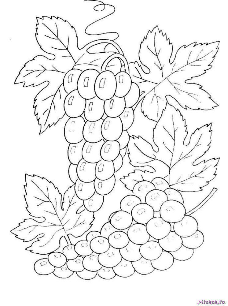Раскраска красивый виноград