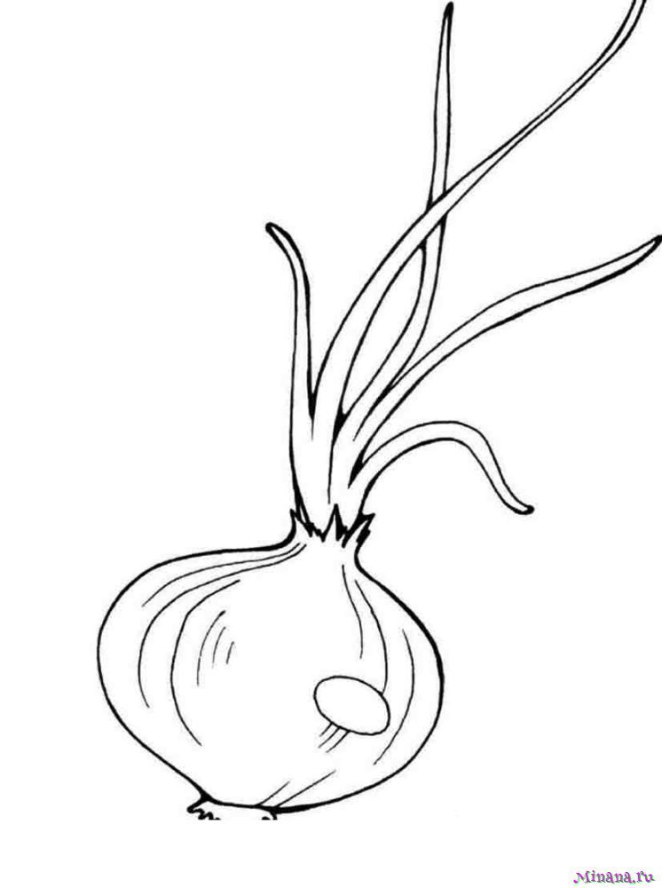 Раскраска лук 3