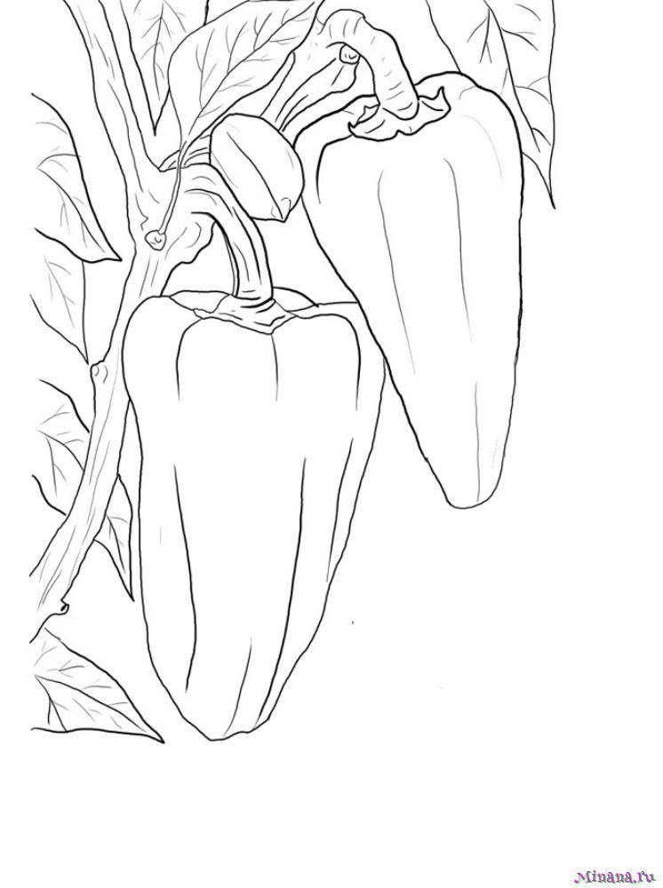 Раскраска перец 5