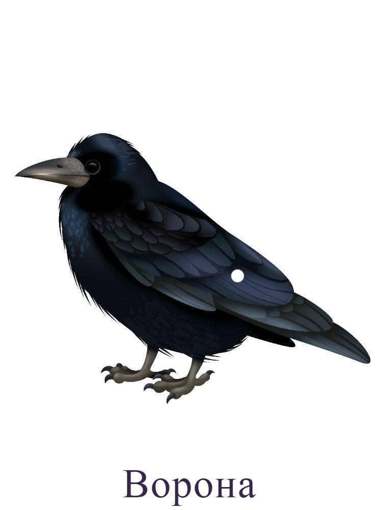 Ворона р