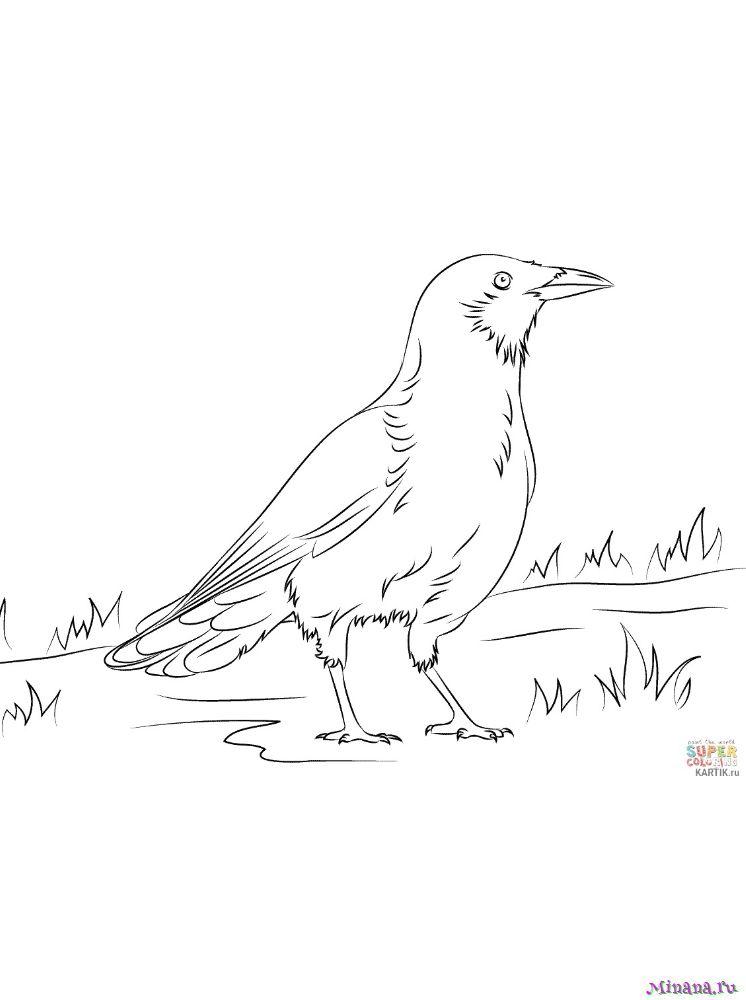 Раскраска ворона 4