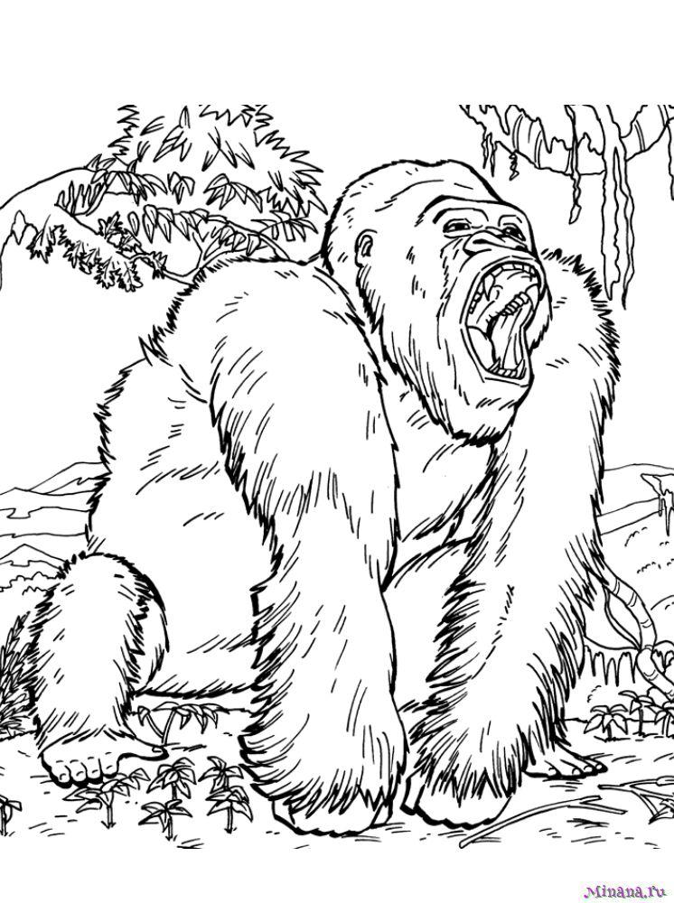 Раскраска горилла 3