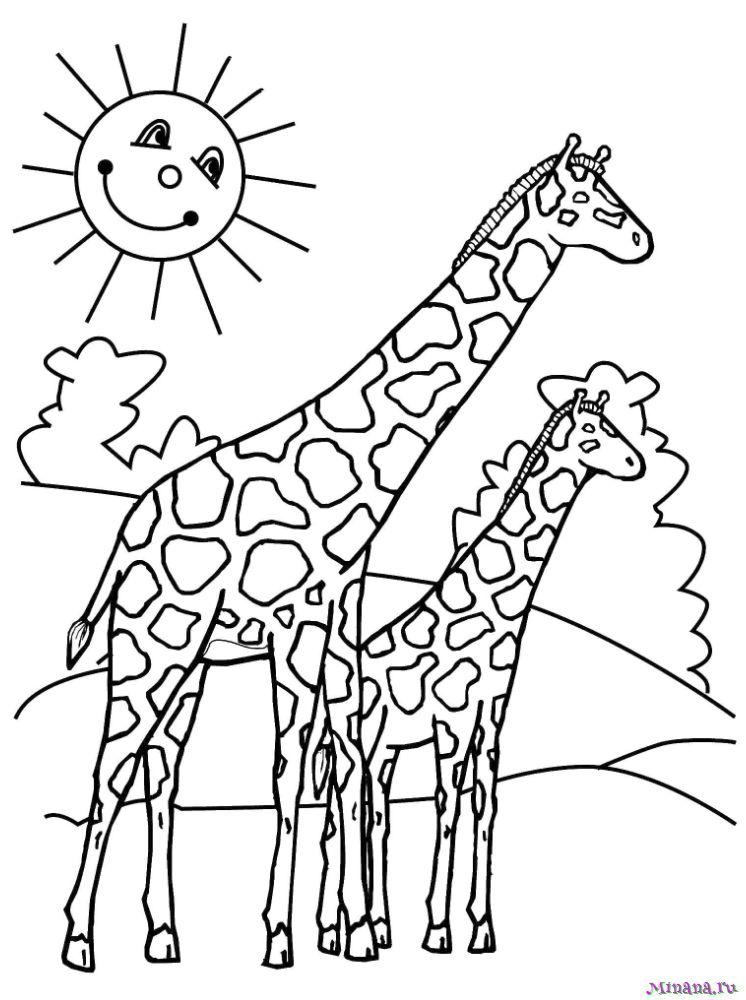 Раскраска два жирафа
