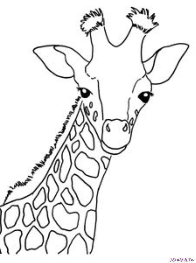 Раскраска жираф 3