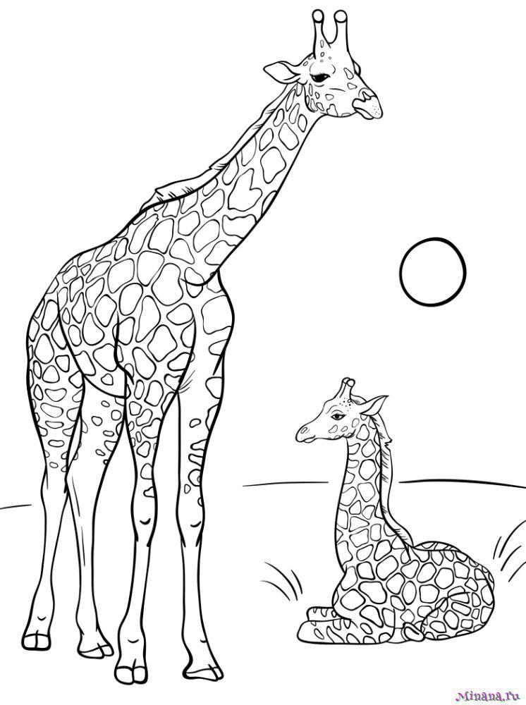 Раскраска жираф 4