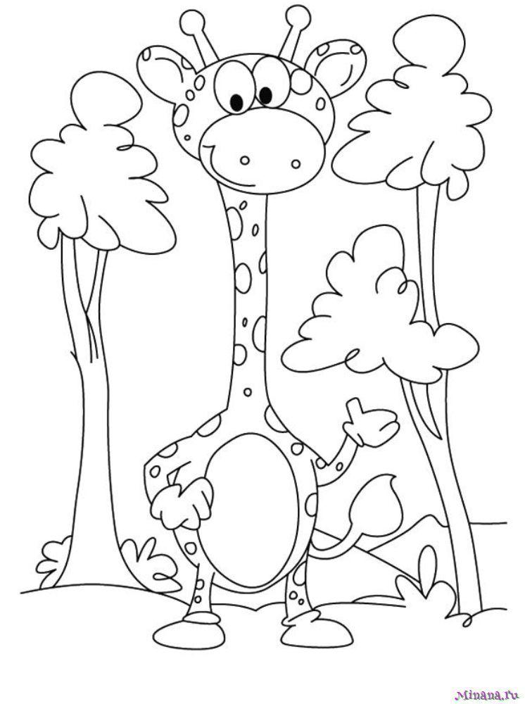 Раскраска жираф 8