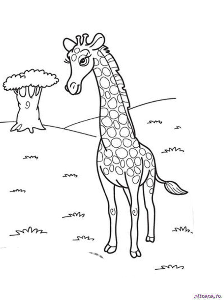 Раскраска жираф 9