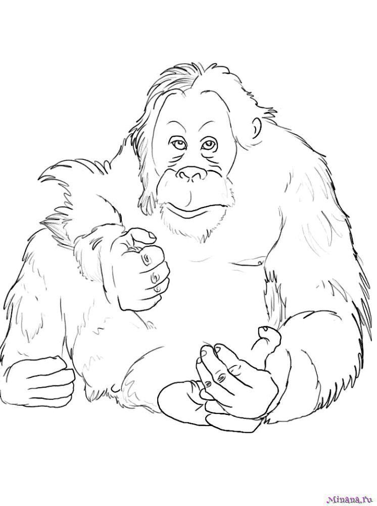 Раскраска baby orangutan