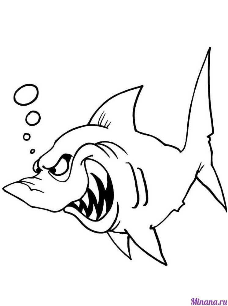 Раскраска акула 4