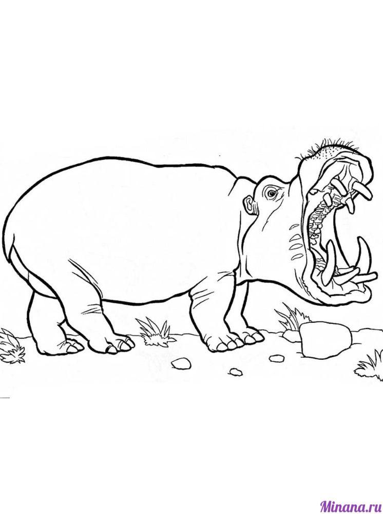 Раскраска бегемот 4
