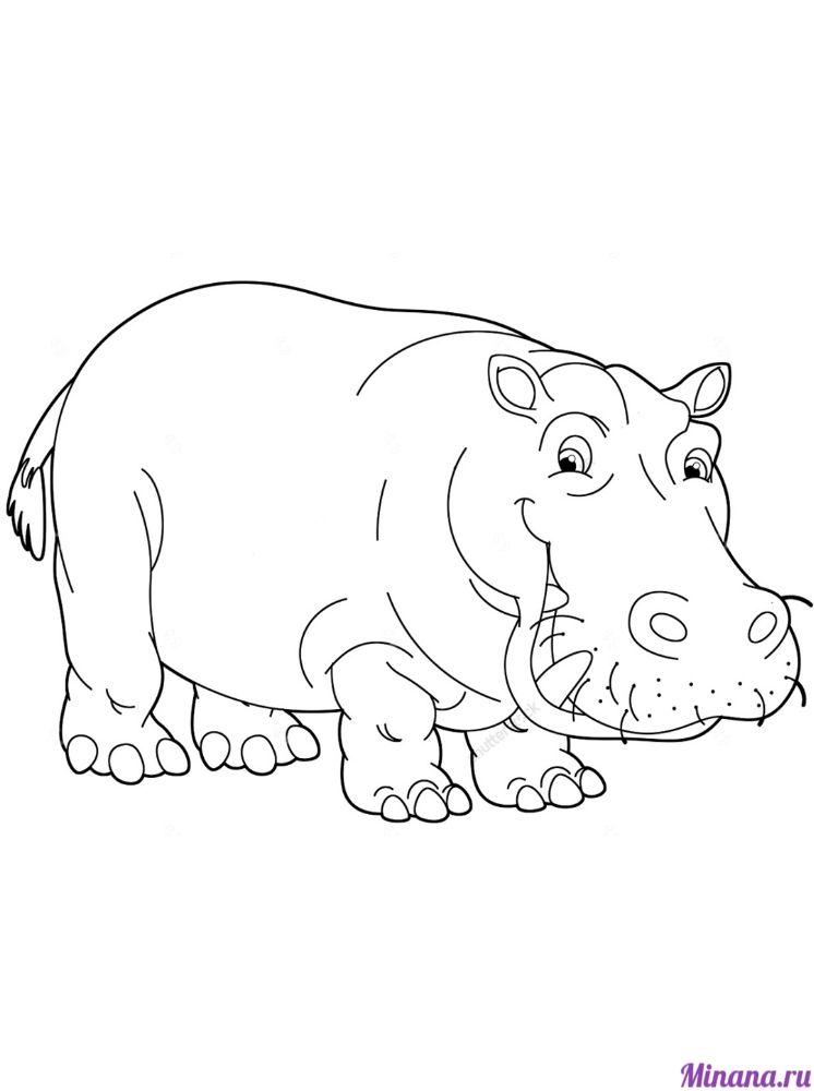 Раскраска бегемот 8